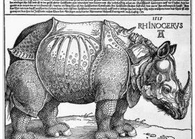 2-Durer rhino(1)